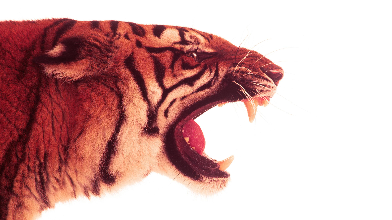esso-tiger-by-philip-lane