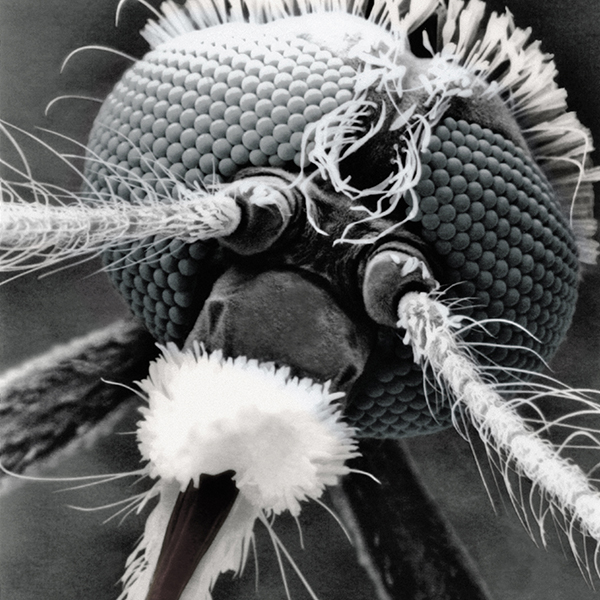 scanning-electron-micorscope-by-philip-lane-photography