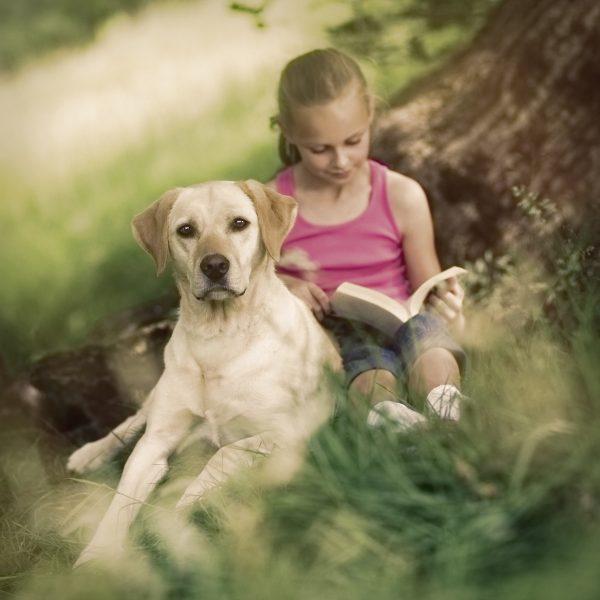 labrador under tree