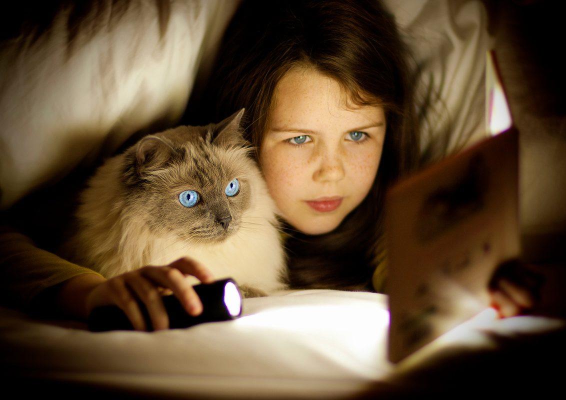 petsafe-cat-by-philip-lane-photography